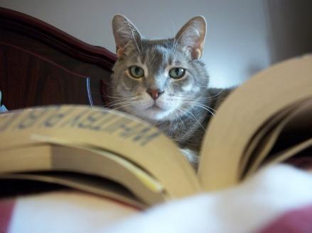 Bored Cat Reading Book