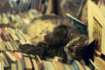 cat_books____by_umutvedat-500x333