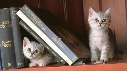 cats on a bookshelf