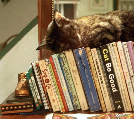 Sleepy Kitty On Books